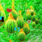 Escape Fruit Sense