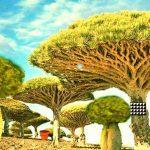 Escape Seedling Afforest
